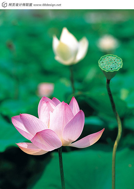 Used Lotus photo 13043