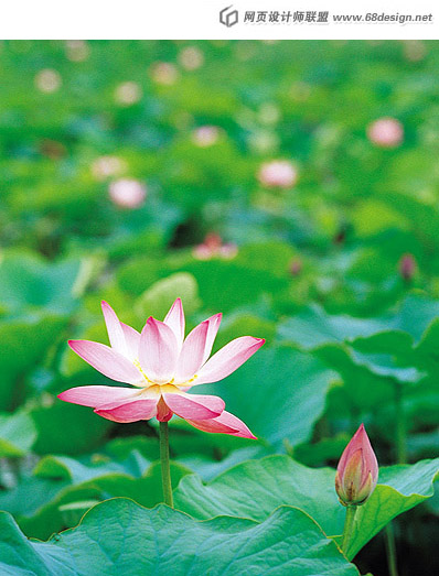 Used Lotus photo 16060