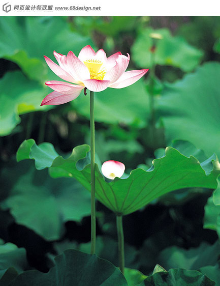 Used Lotus photo 17901
