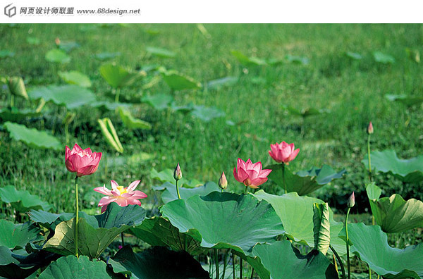 Used Lotus photo 18644