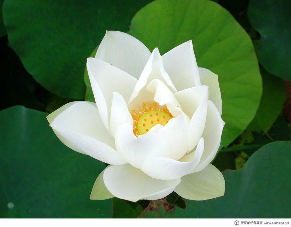 Used Lotus photo 20336