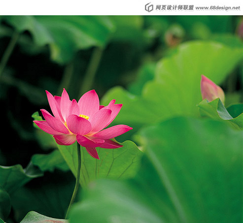 Used Lotus photo 20377