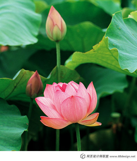 Used Lotus photo 4186