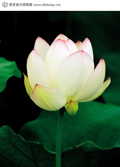 Used Lotus photo 8905