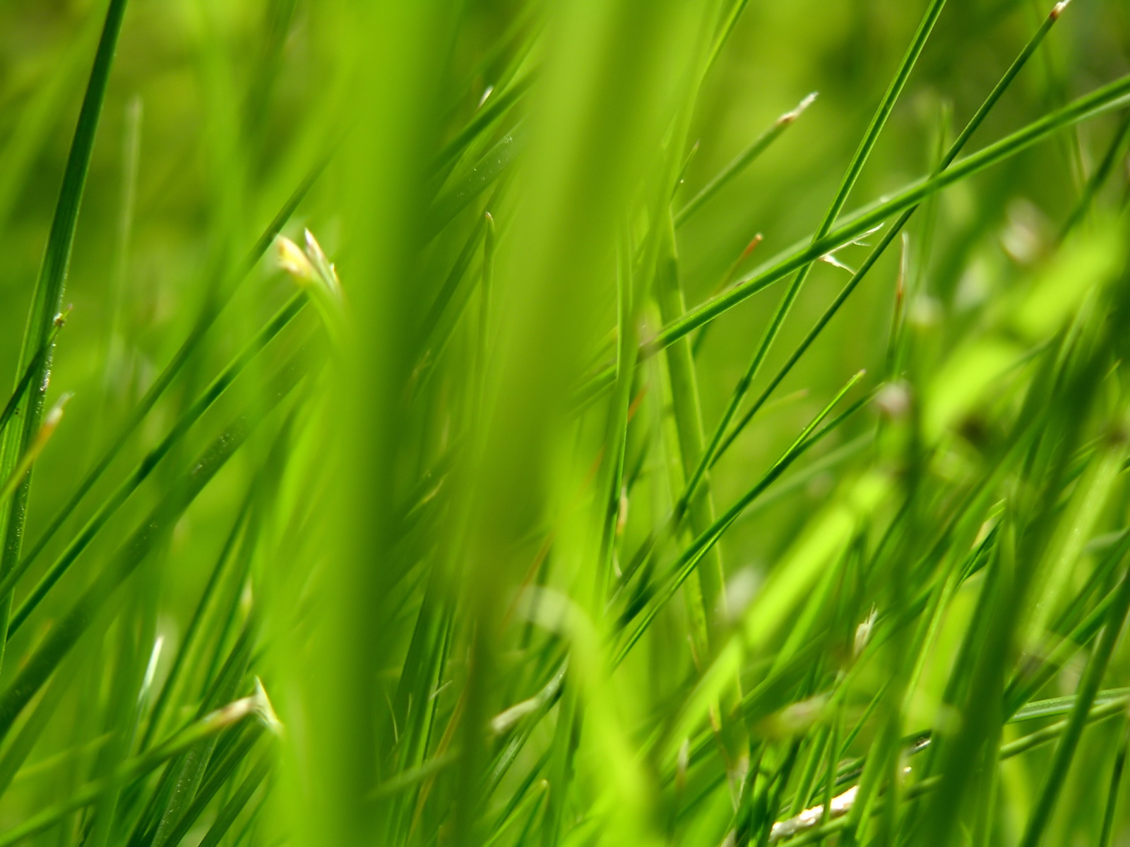 Green series of high-definition 10983