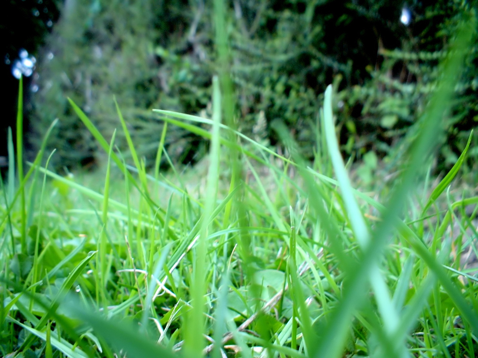 Green series of high-definition 13598