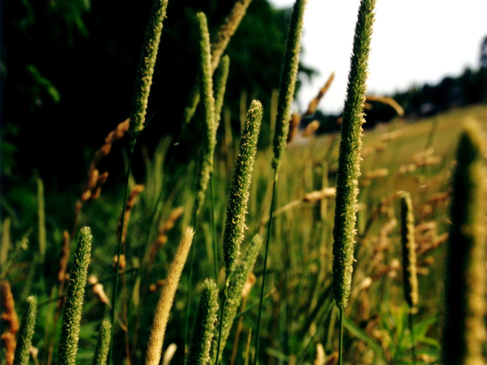 Green series of high-definition 14064
