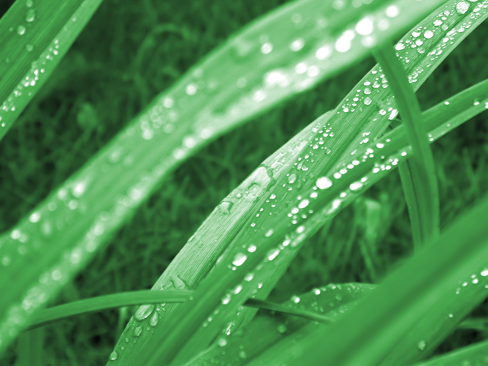 Green series of high-definition 14213