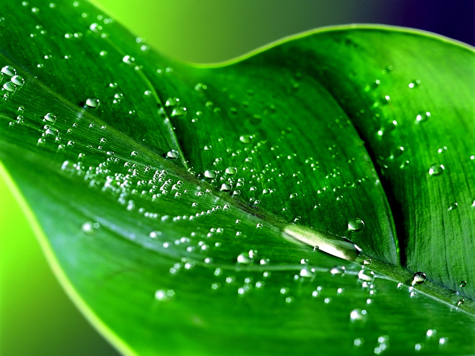 Green series of high-definition 14958