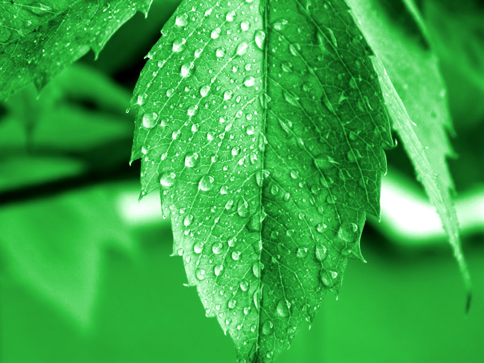 Green series of high-definition 15644