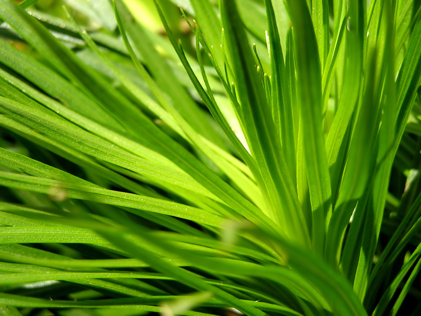 Green series of high-definition 16297