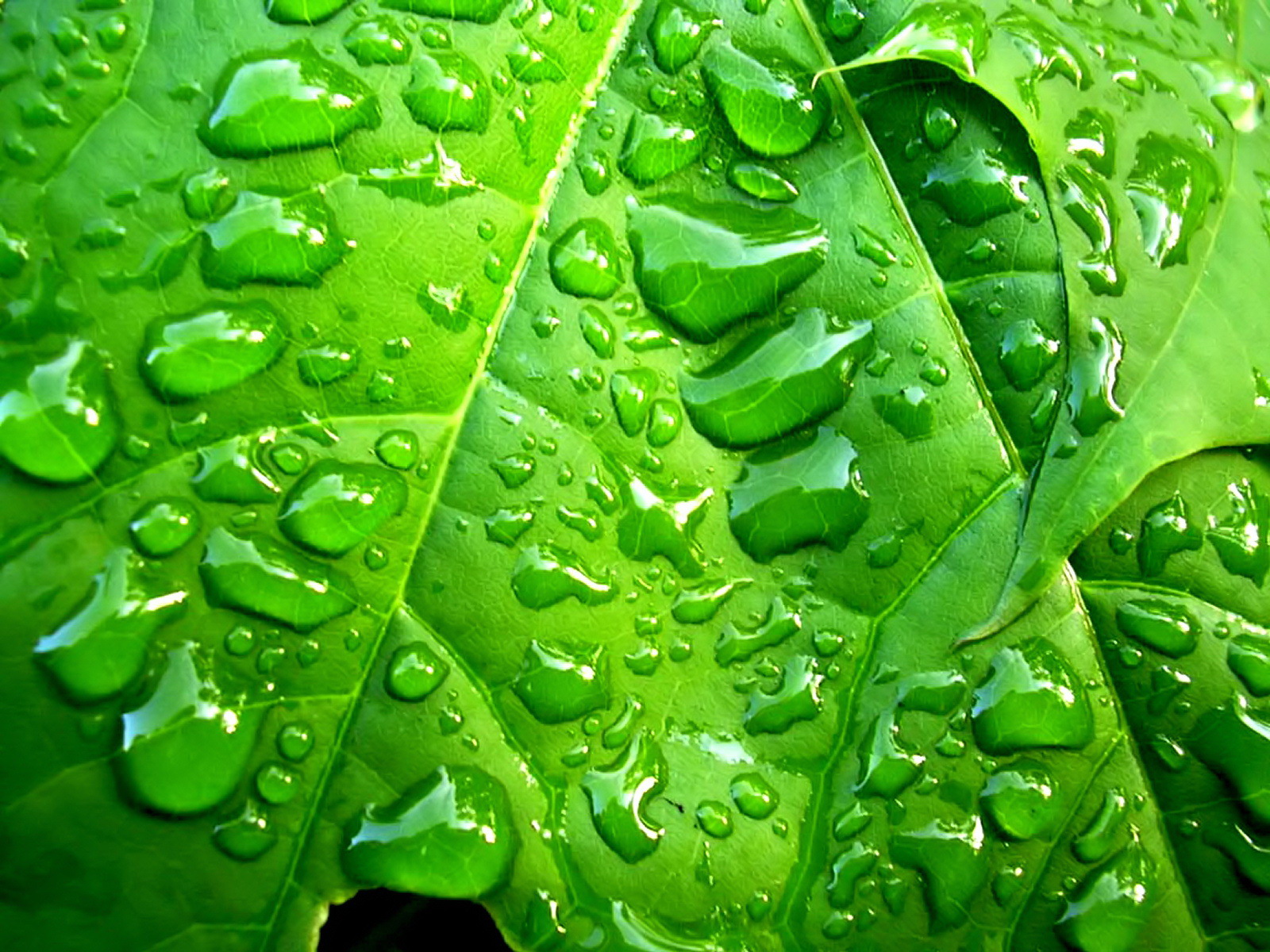 Green series of high-definition 16822