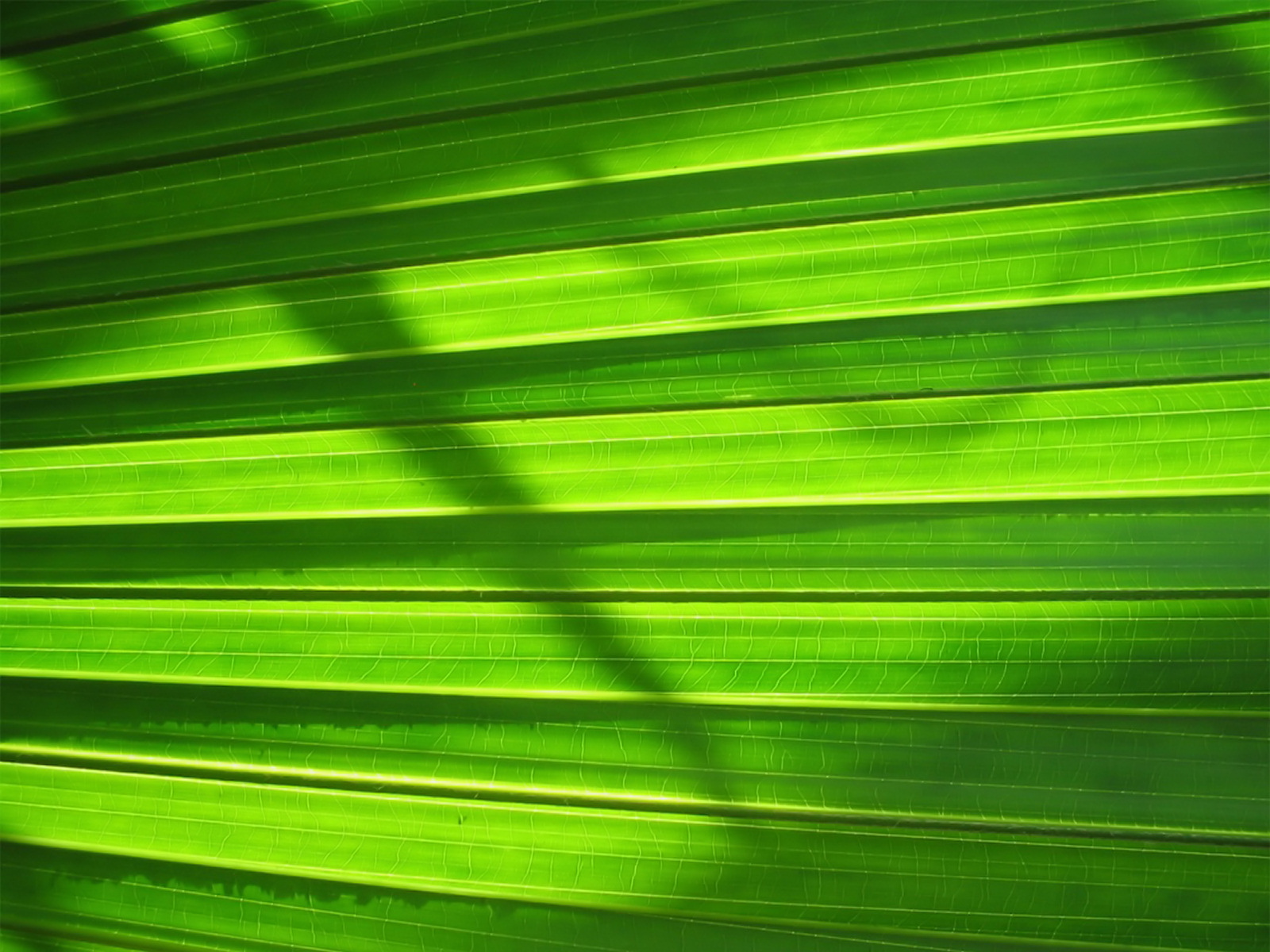 Green series of high-definition 16936