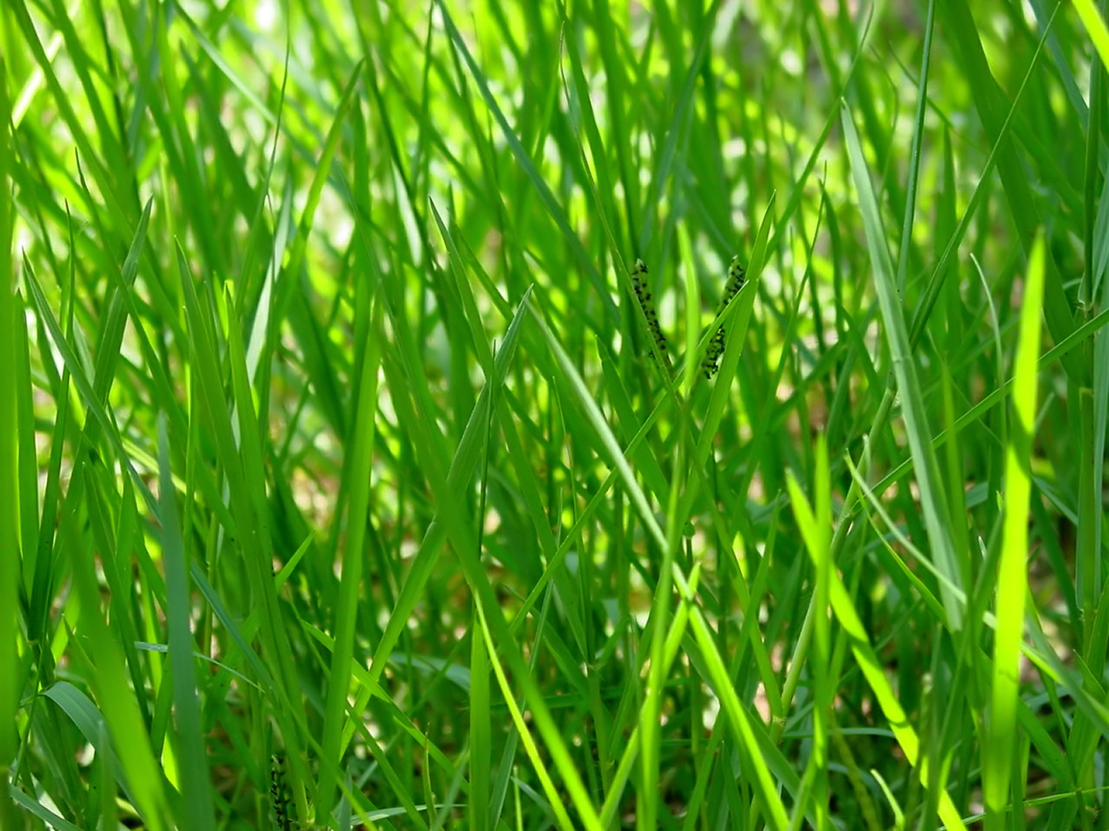 Green series of high-definition 17048