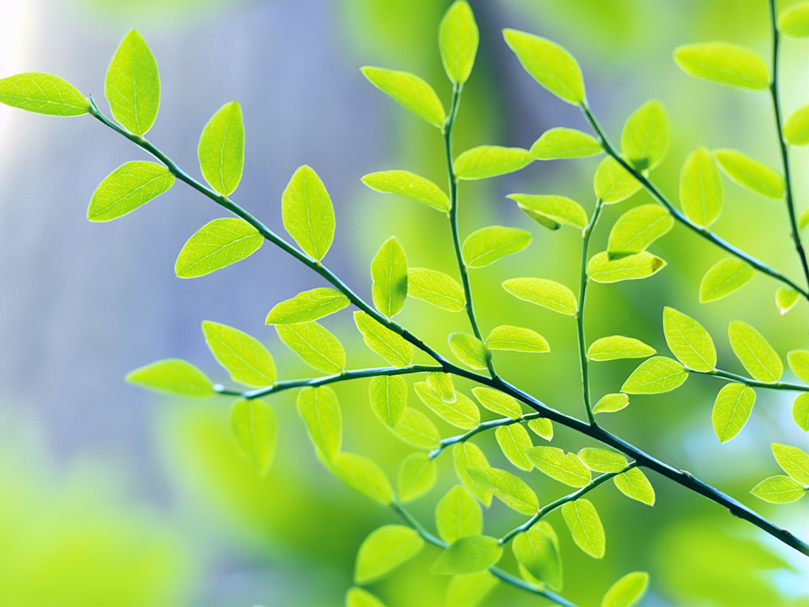 Green series of high-definition 17694