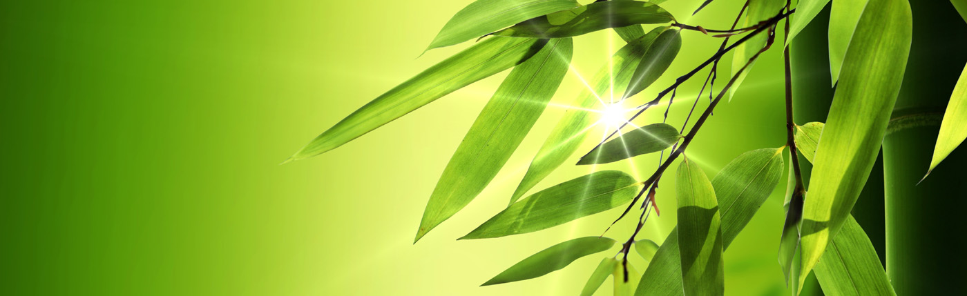 Bamboo leaves background 30676