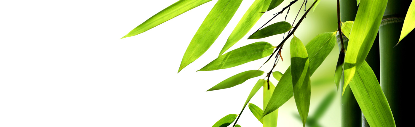 Bamboo leaves background 30711