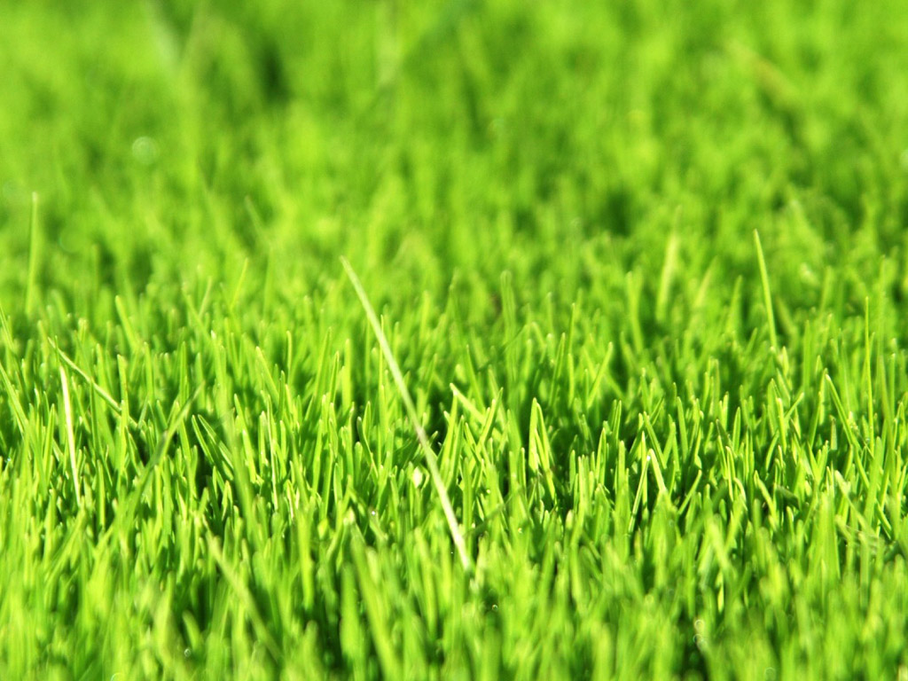 Green grass leaves 4187