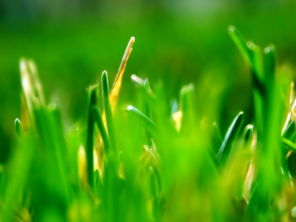 Green grass leaves 4772