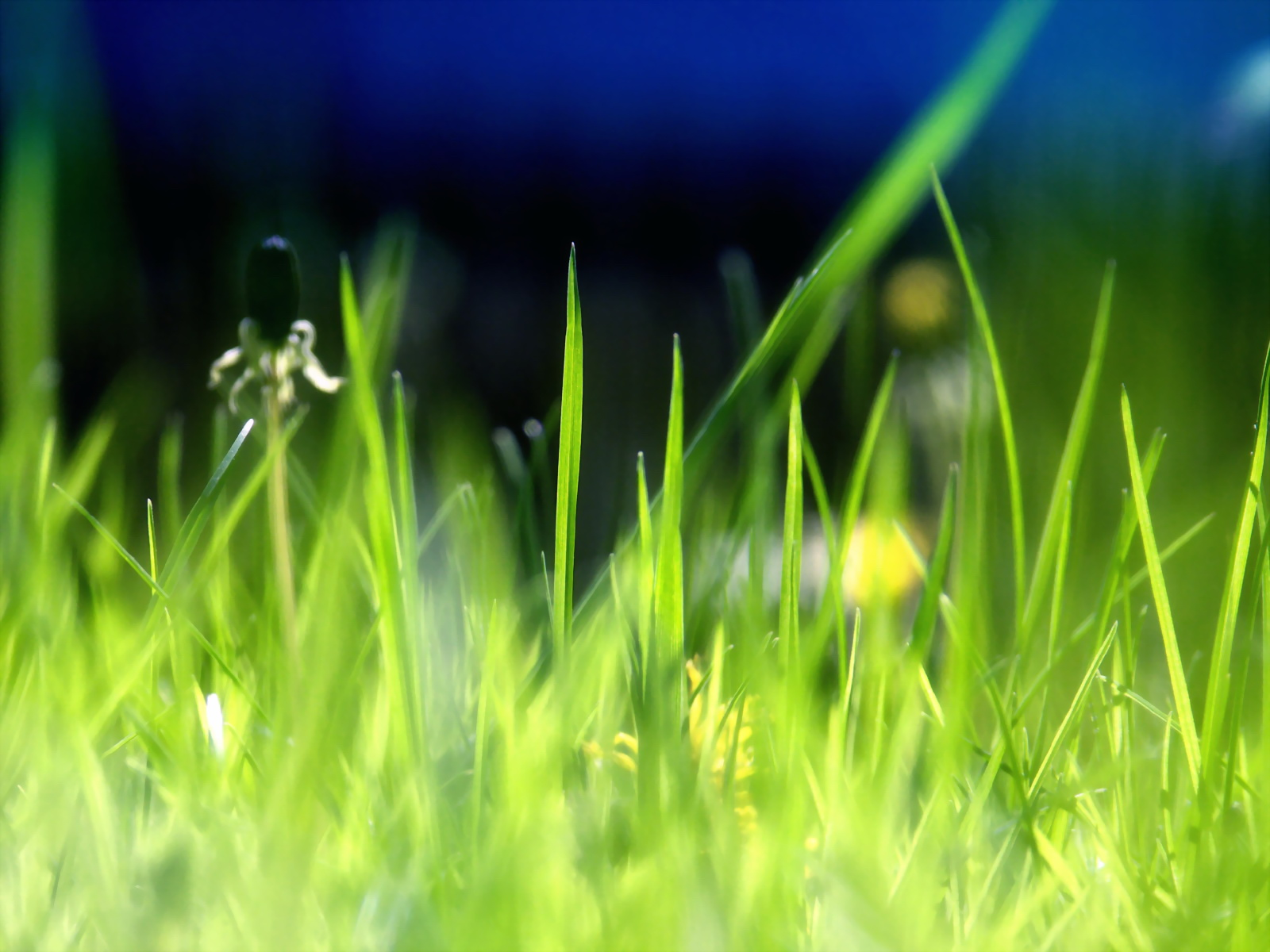 Green grass leaves 5769
