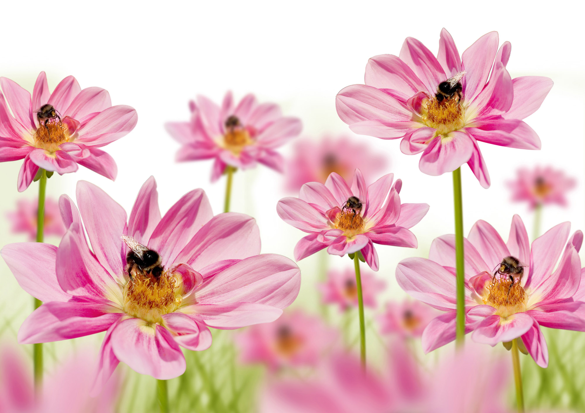 high-resolution photo flowers 26908 - flower wallpapers - flowers