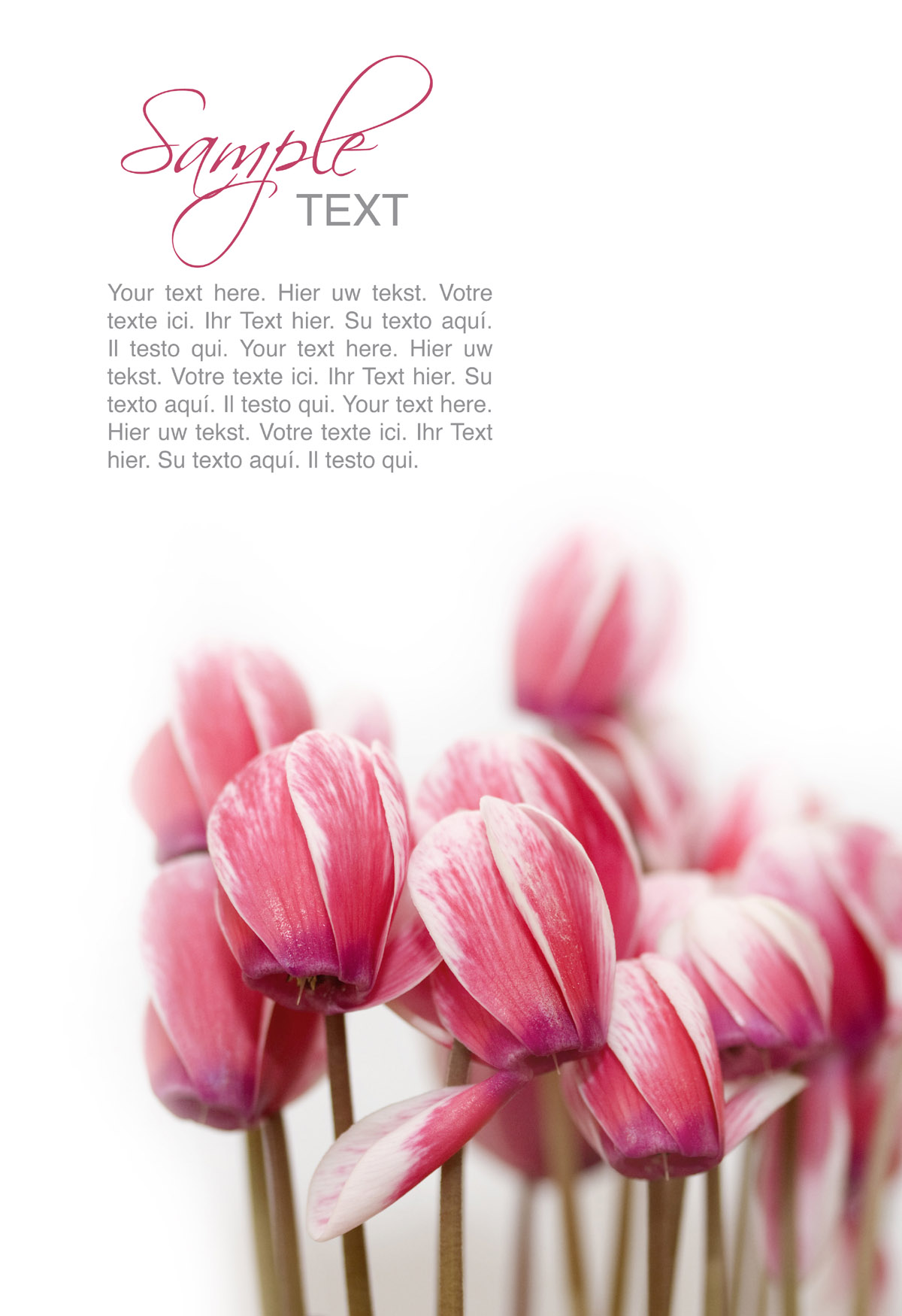 Flowers background 30755