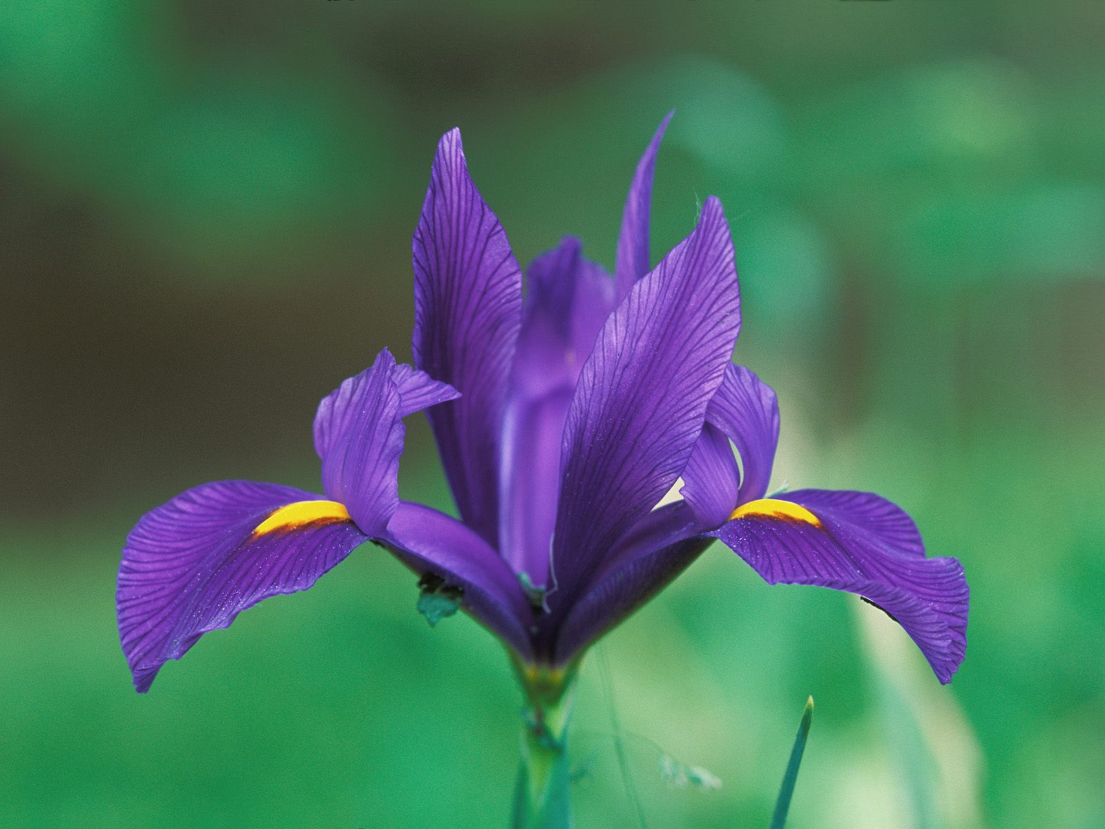 Webshots Wallpapers Flower papers 4627