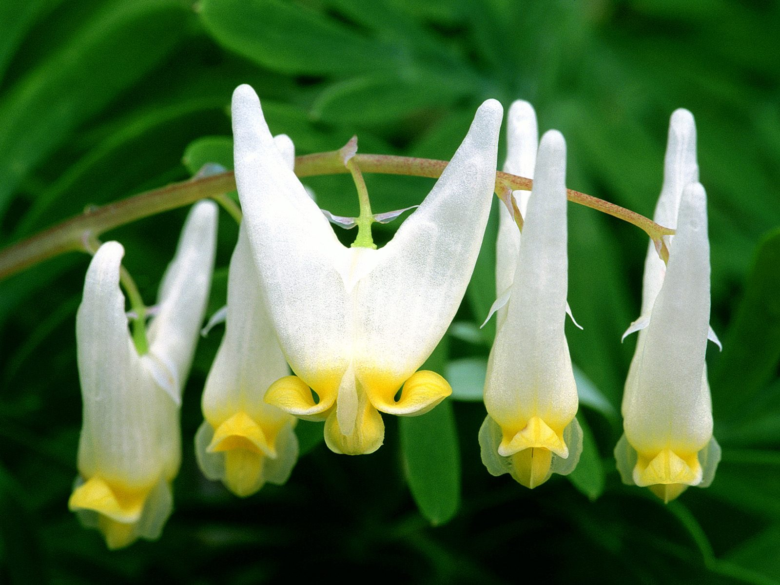 Webshots Wallpapers Flower papers 4773