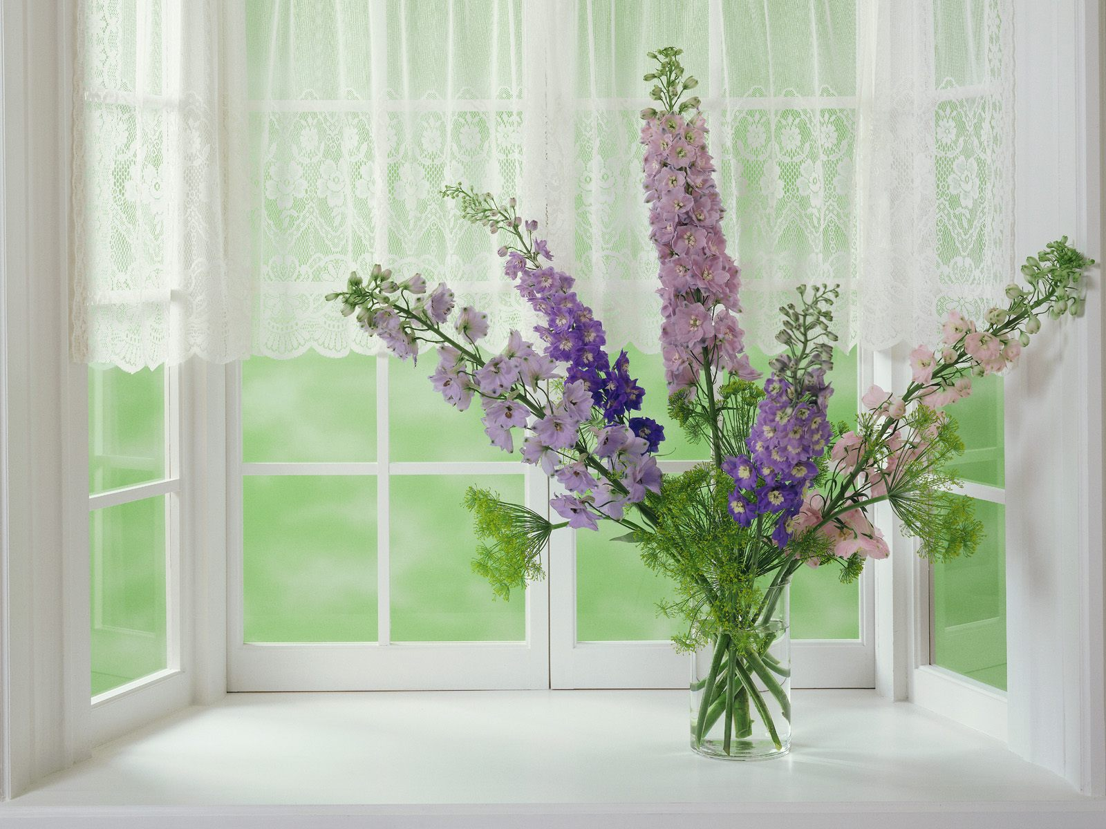 Webshots Wallpapers Flower papers 5345