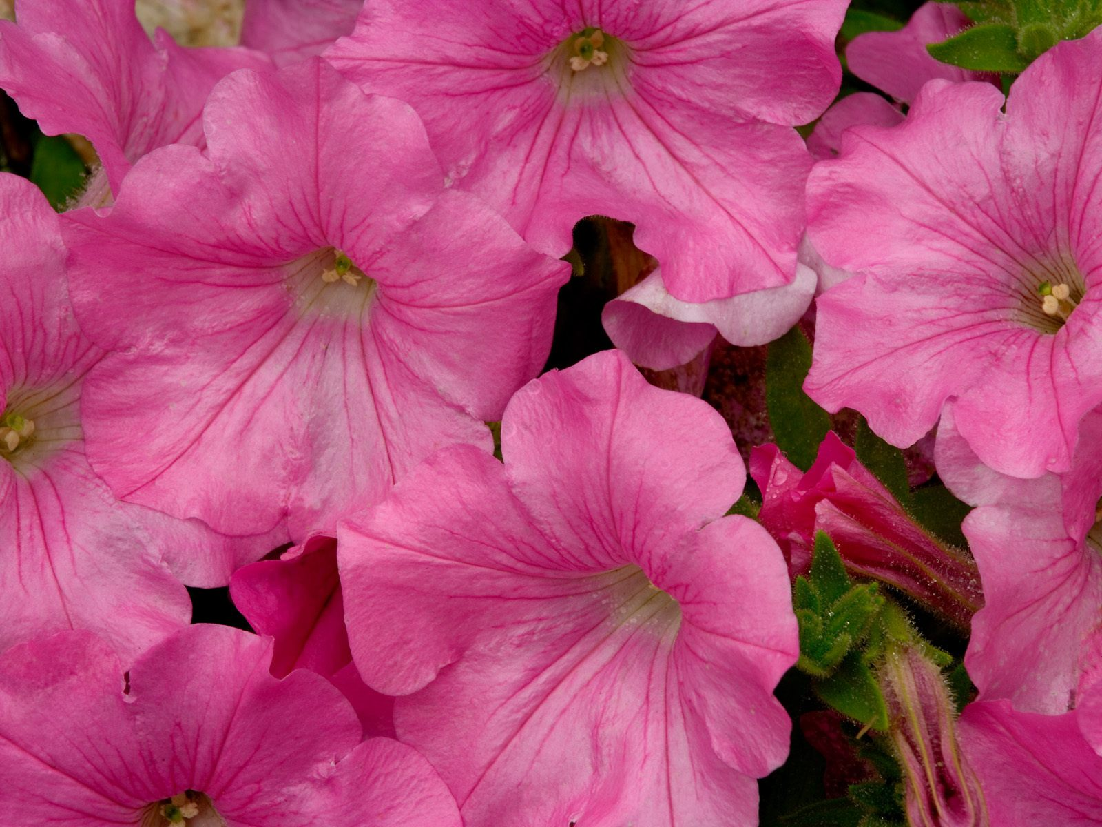 Webshots Wallpapers Flower papers 5629