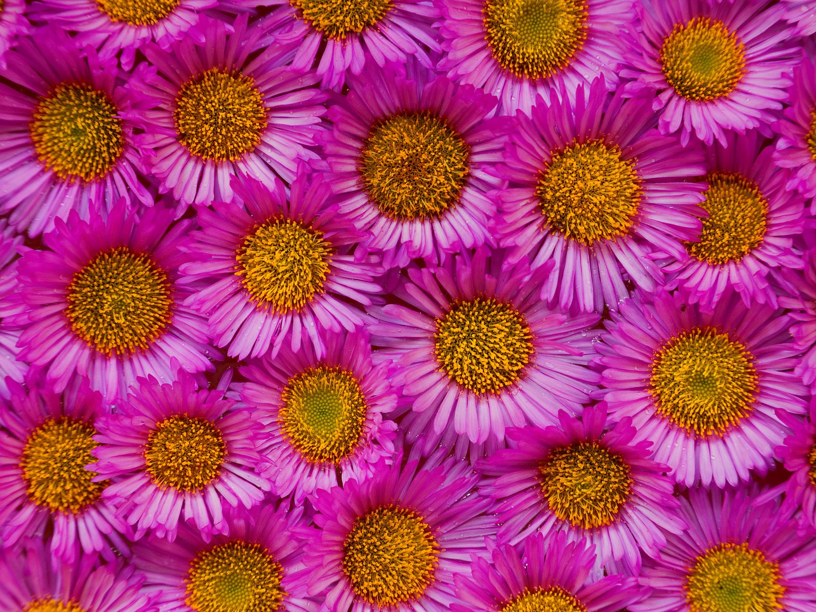 Webshots Wallpapers Flower papers 6192