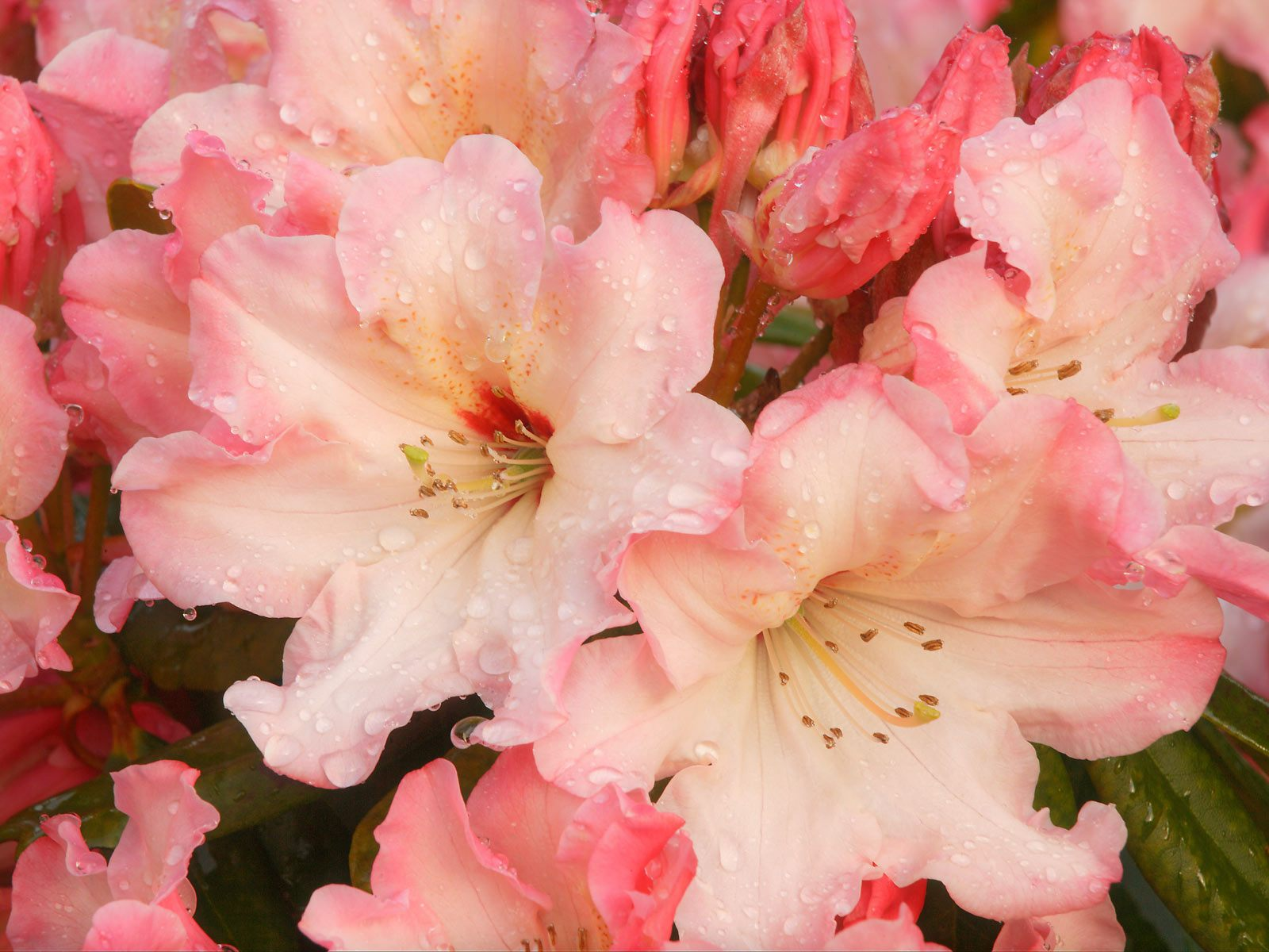Webshots Wallpapers Flower papers 69