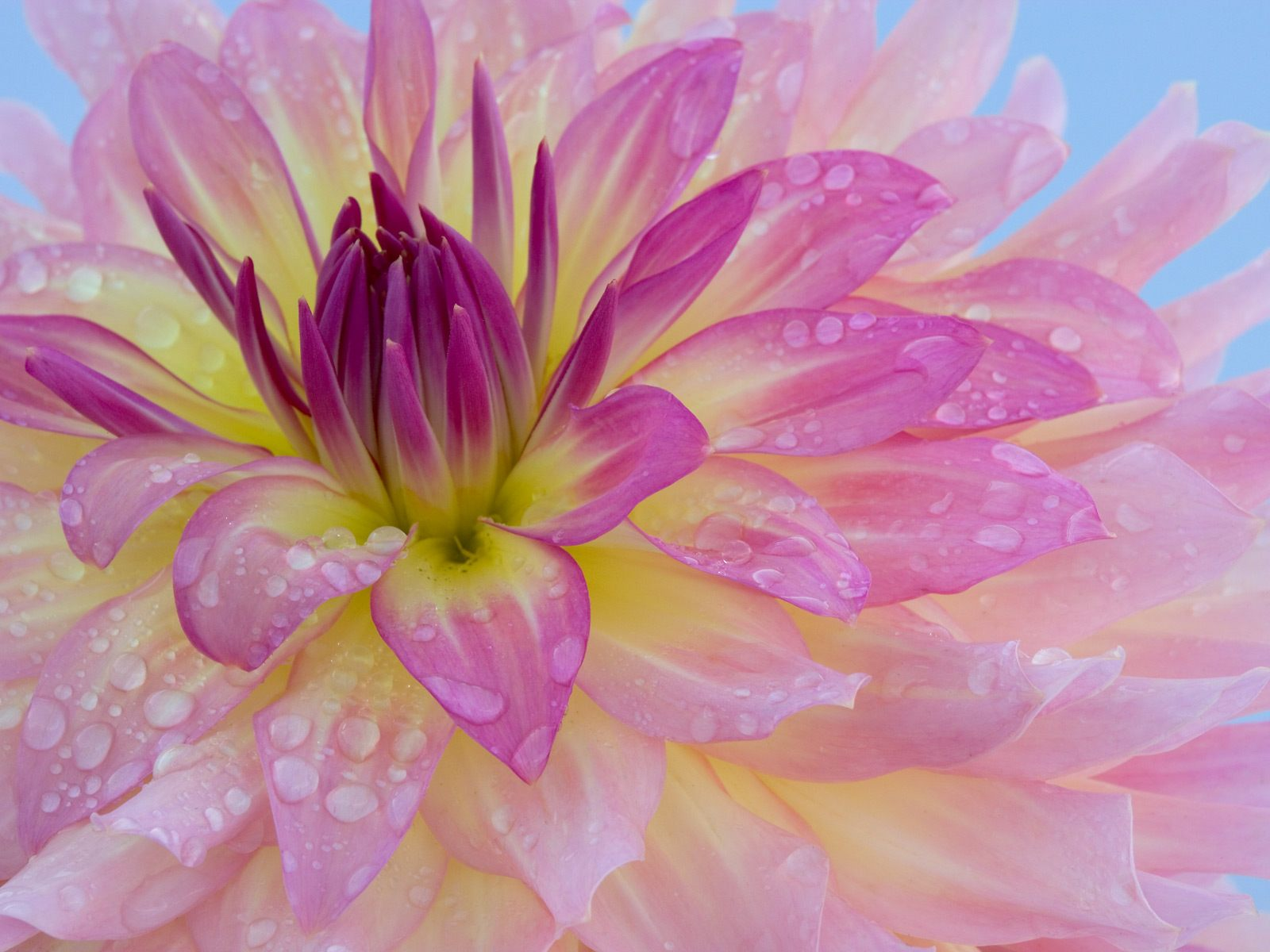 Webshots Wallpapers Flower papers 770