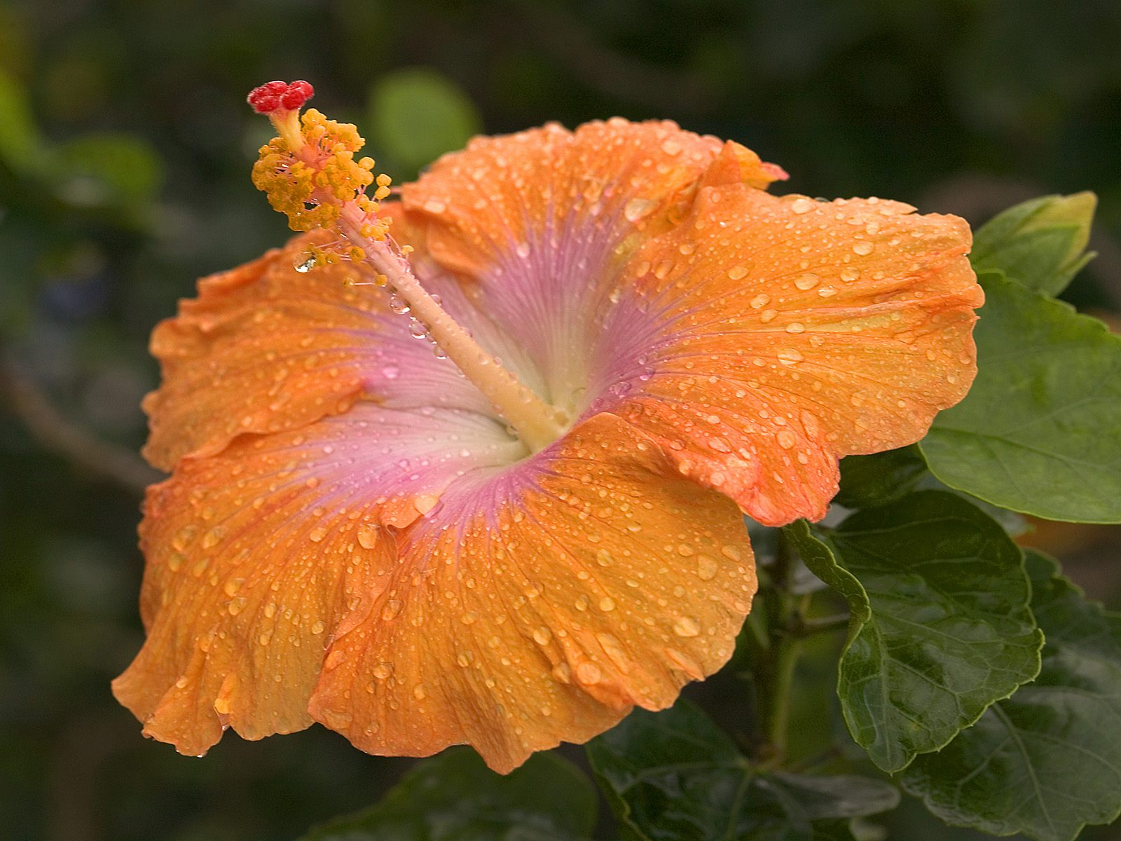Webshots Wallpapers Flower papers 944