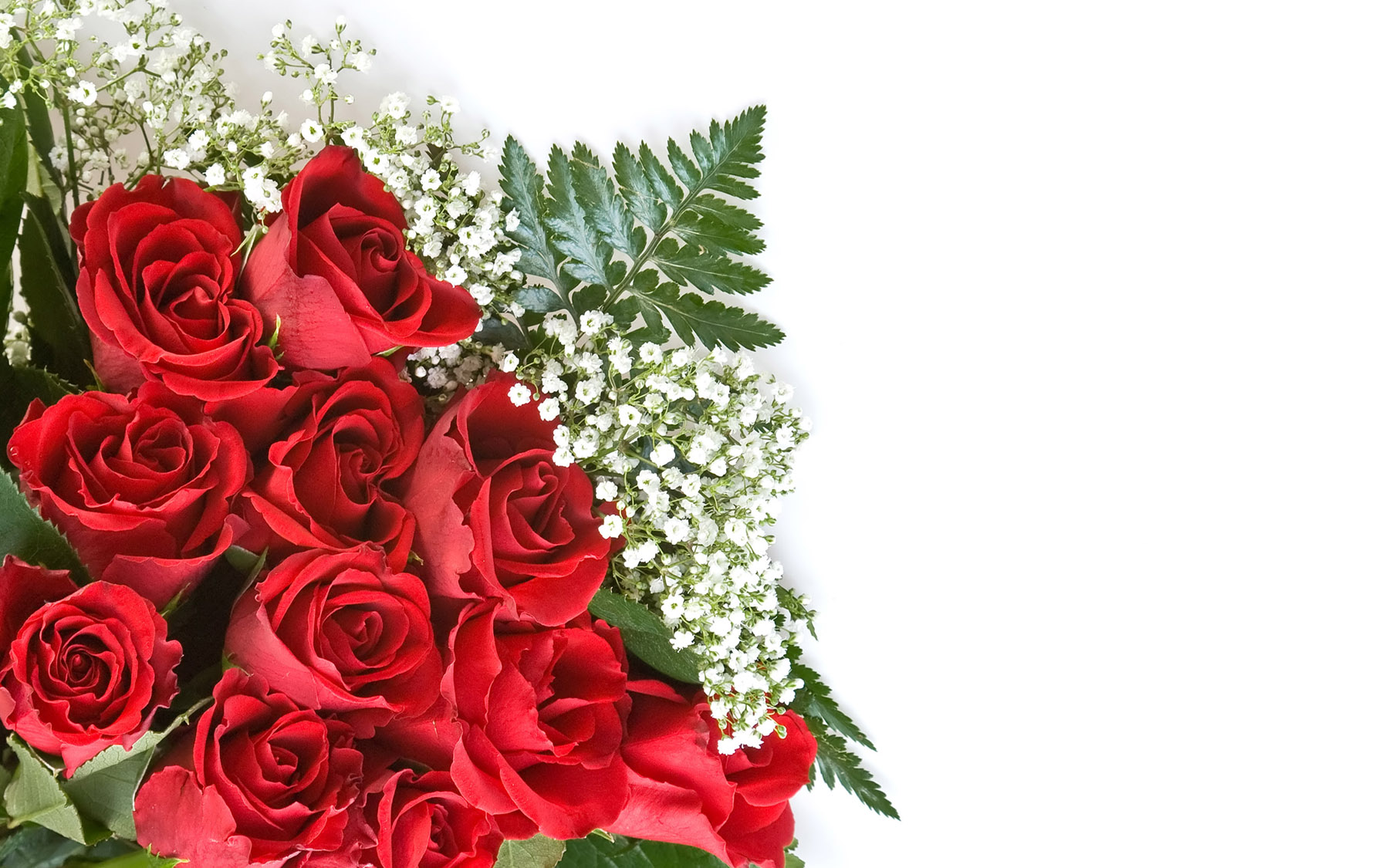 High-resolution photo roses 24983