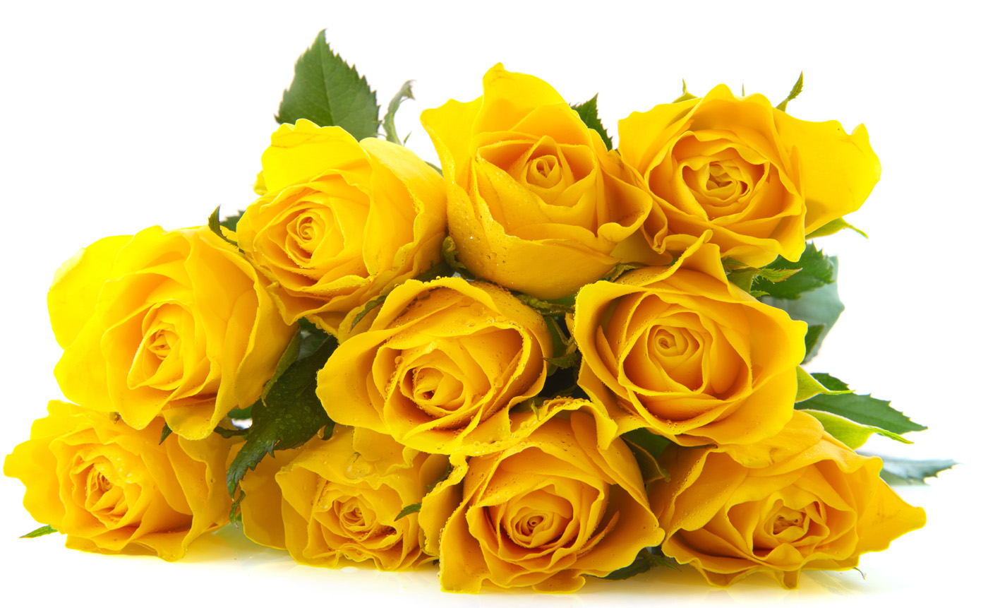 Yellow Rose 26589