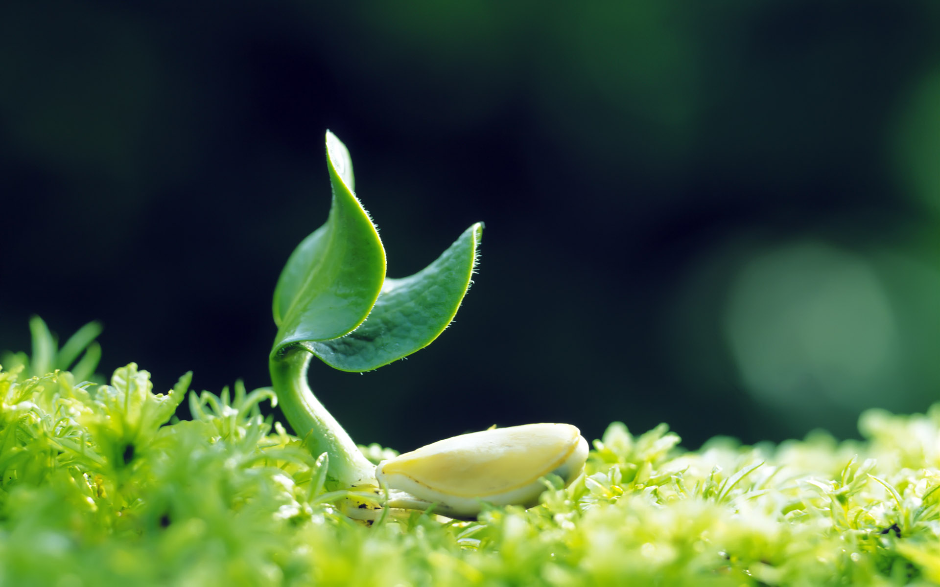 Sprouts leaves 3136