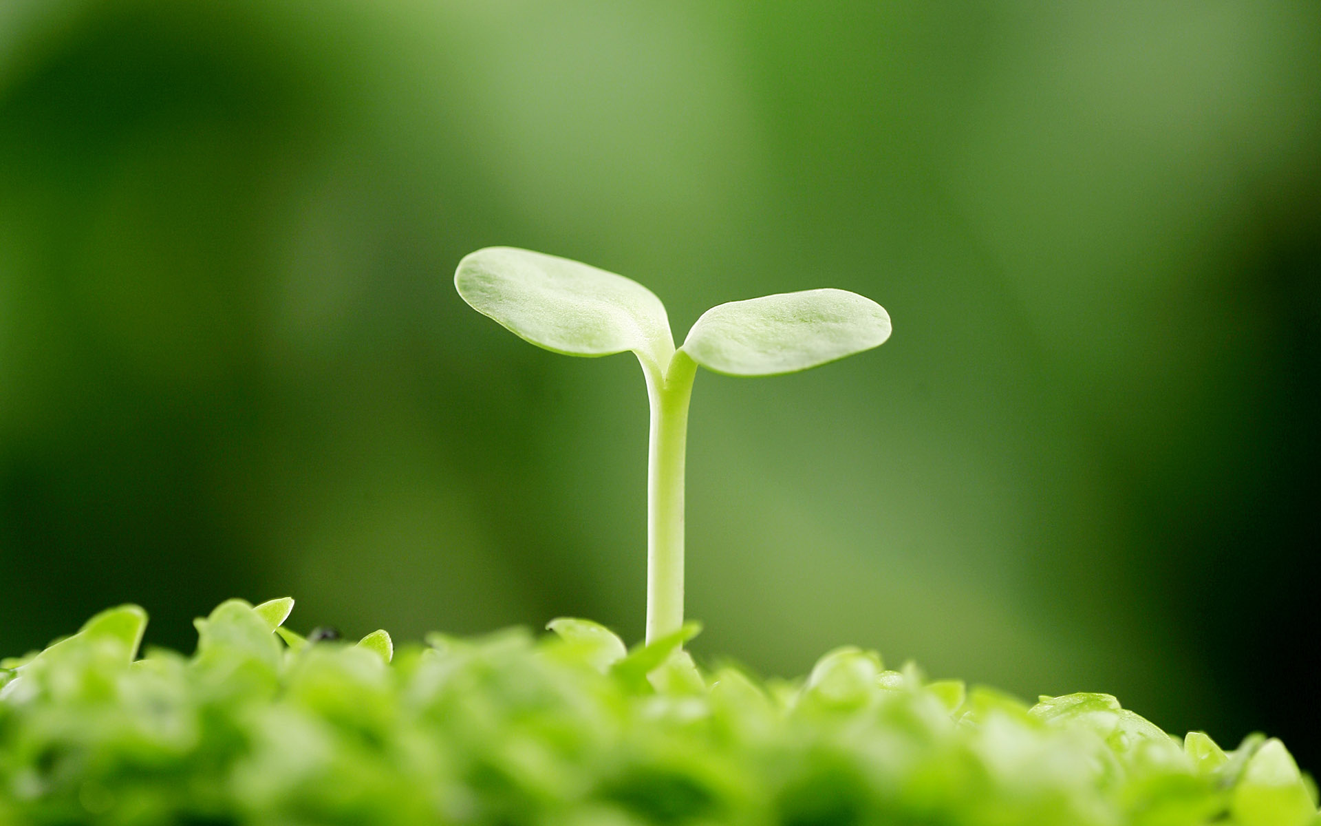 Sprouts leaves 3898