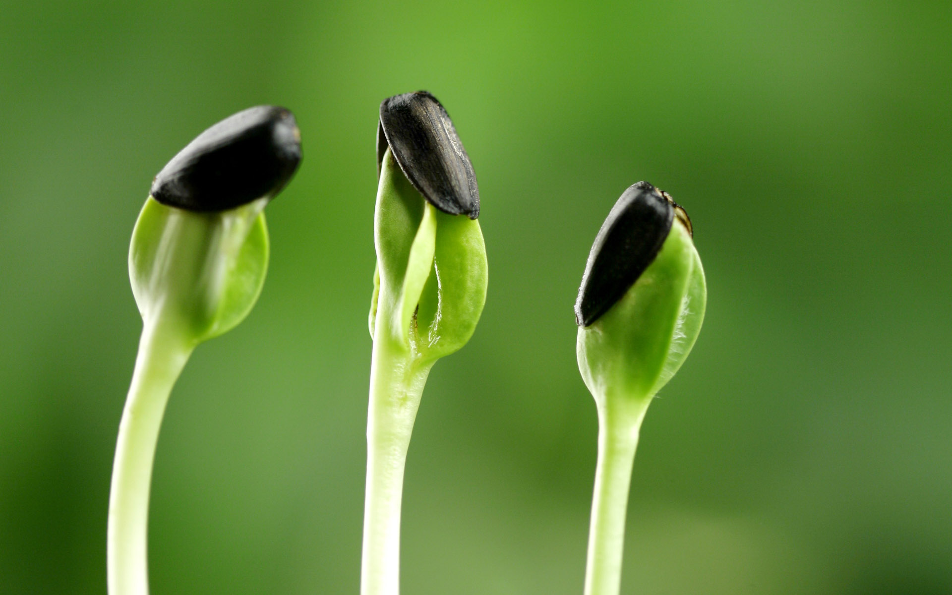 Sprouts leaves 8581