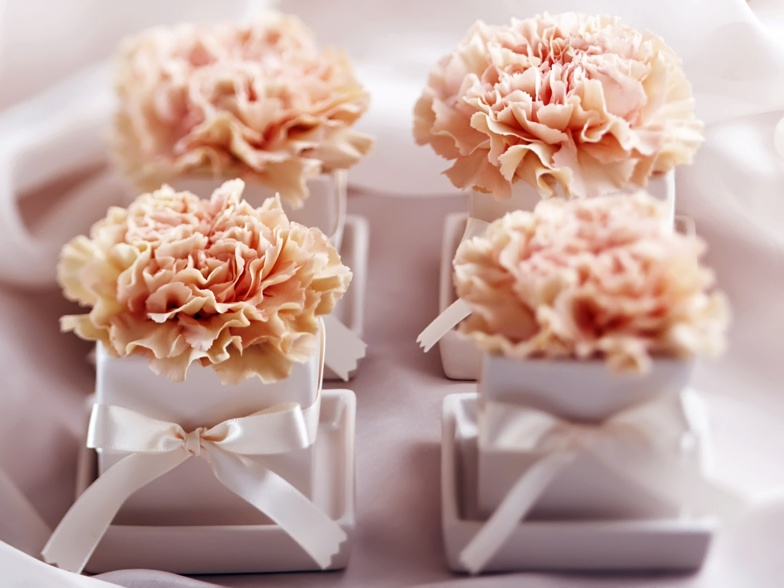 Carnation flowers 3138
