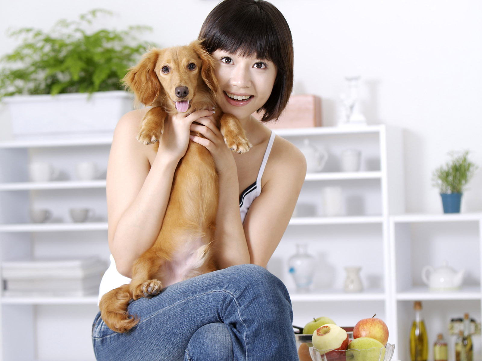 Beauty and the pets 20421