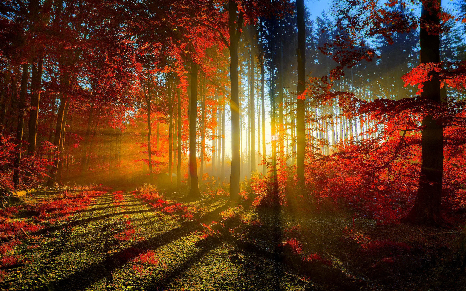 Forest Sunset 49639