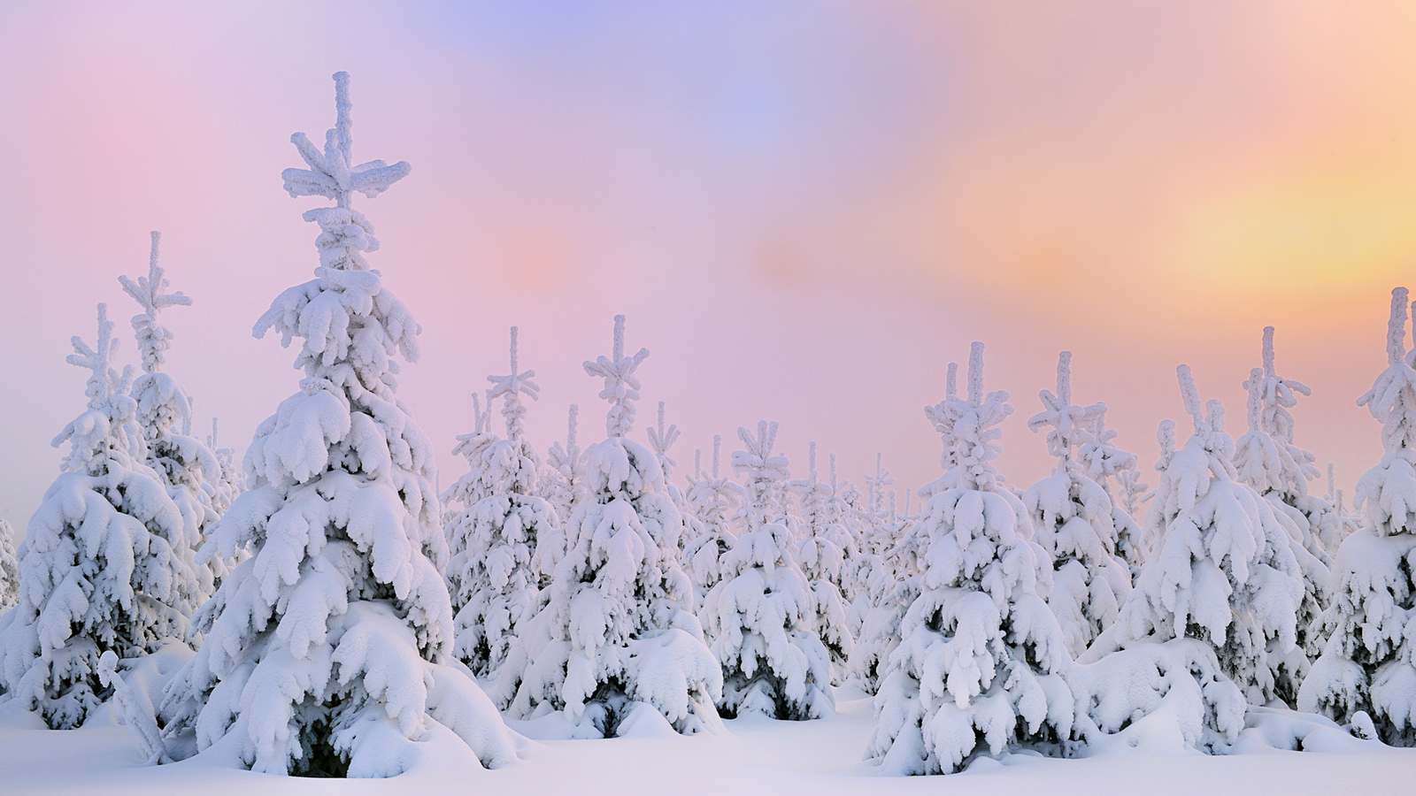 Winter Snow Desktop Wallpaper HD 49817
