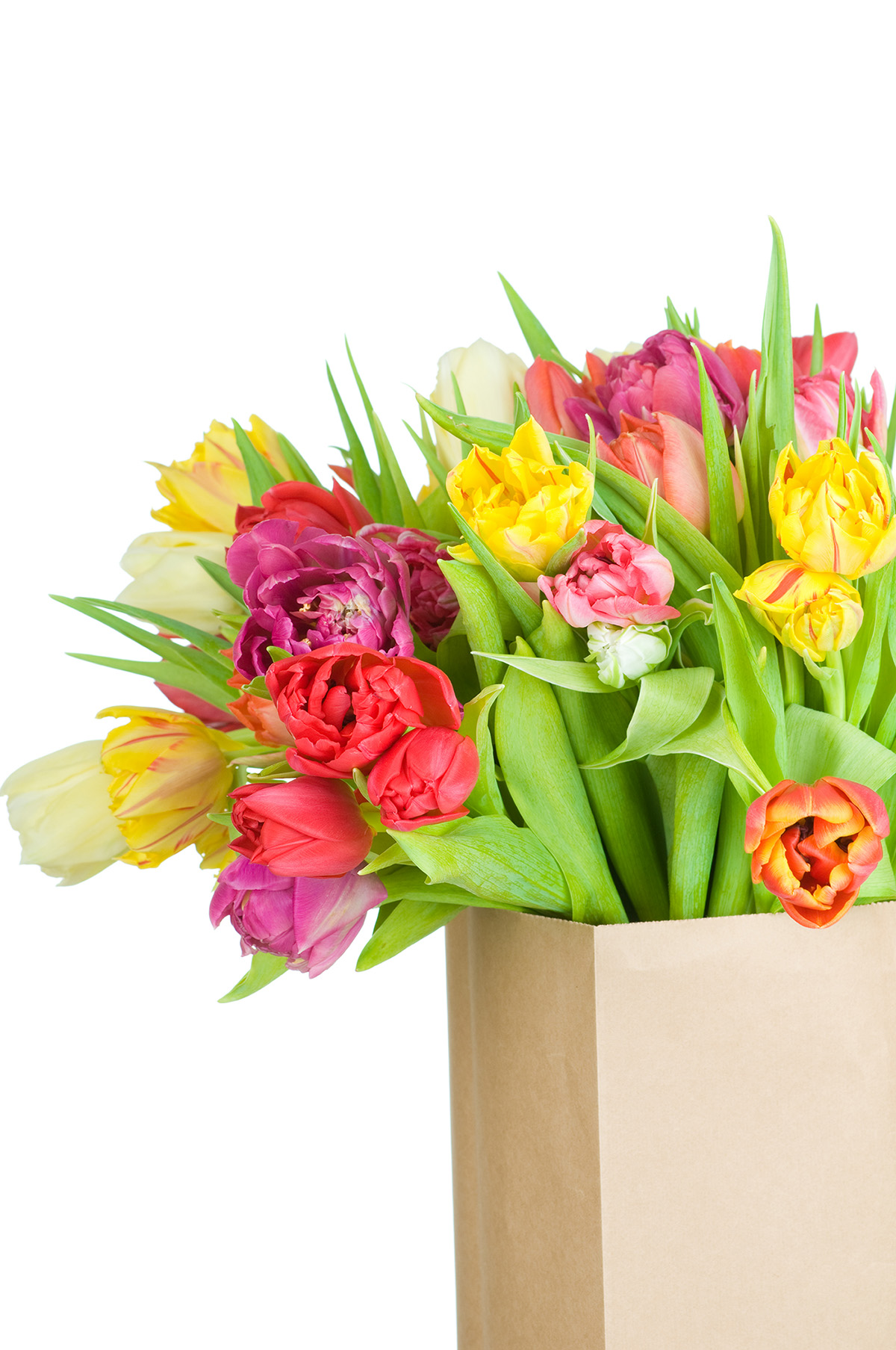 Paper packaging bag of tulips 50024