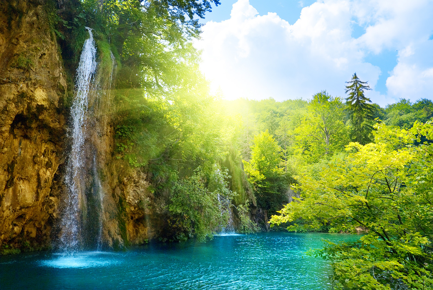 Lush trees and a waterfall pool 50073
