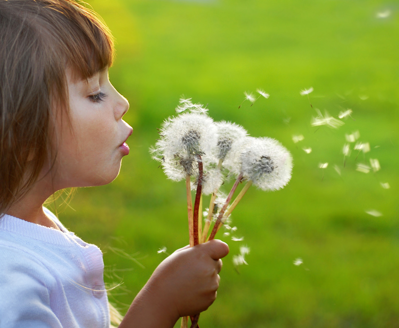 Cute little girl blowing dandelion 50076