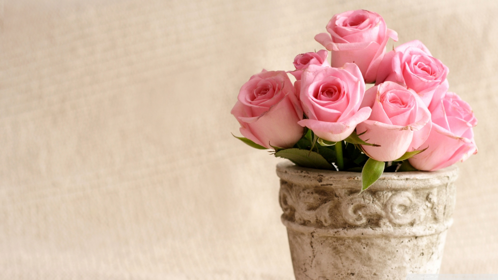 Pink roses 50092