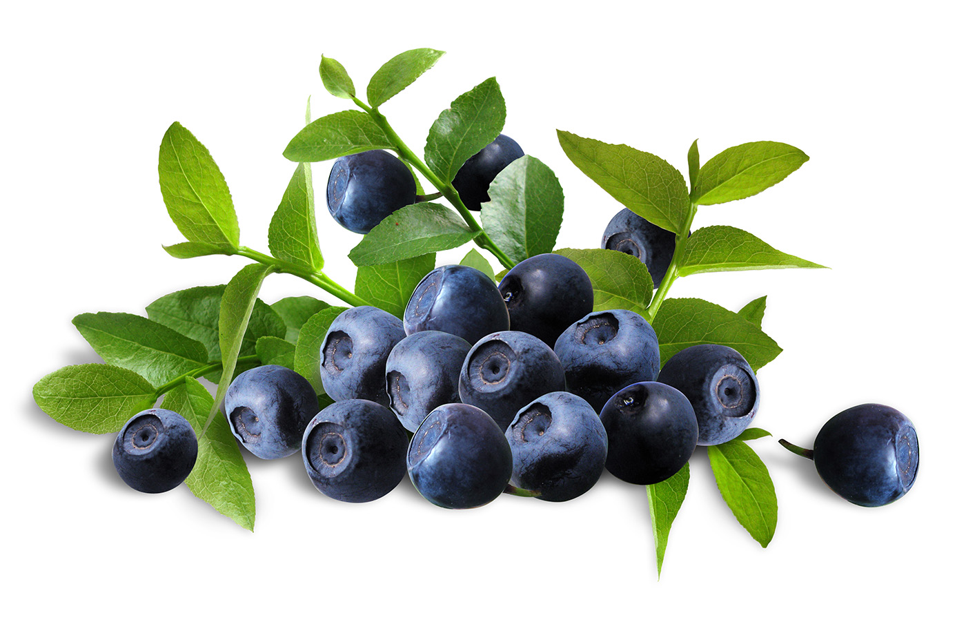 Blueberries 50141