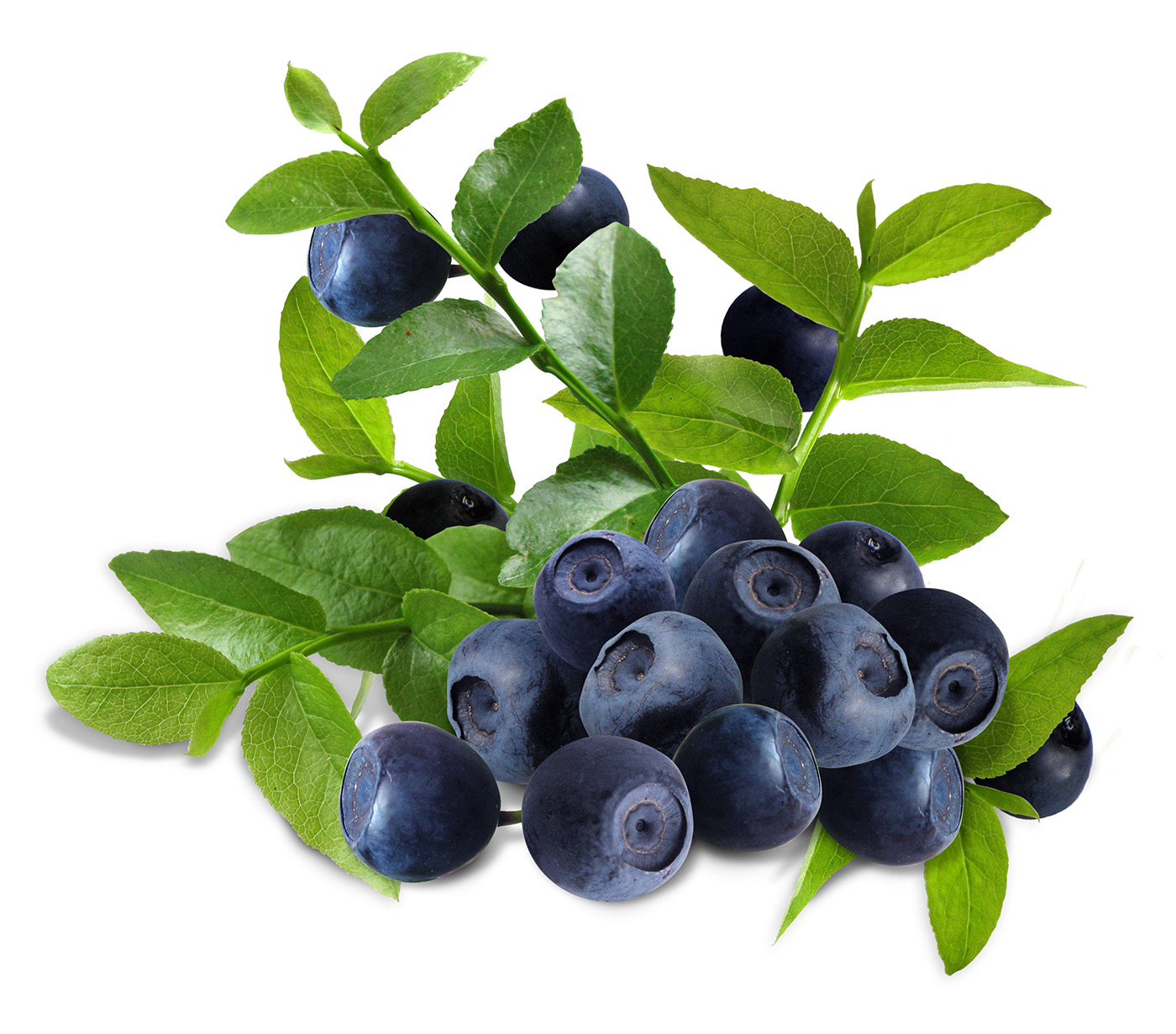 Blueberries 50148