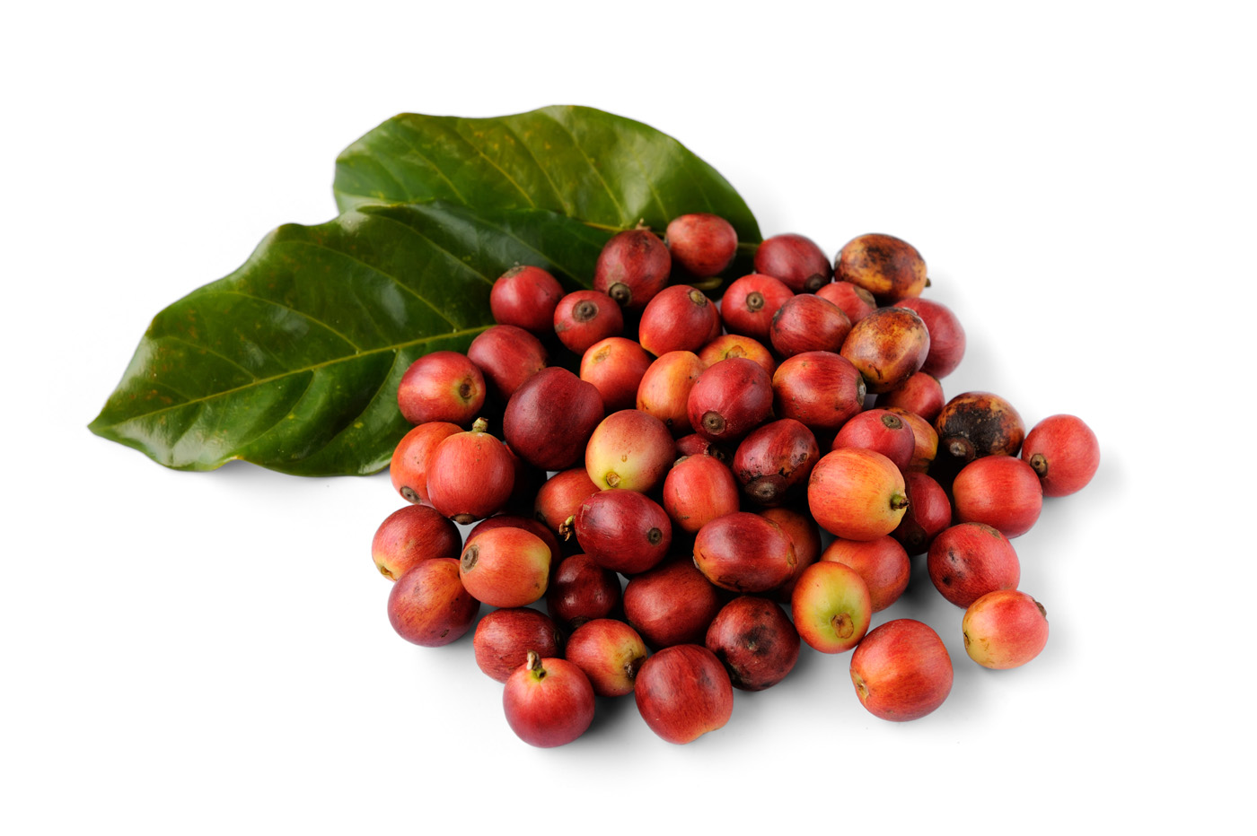 Raw coffee beans 50276
